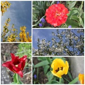 Frühling rundherum